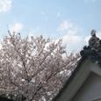 旧真田邸の桜